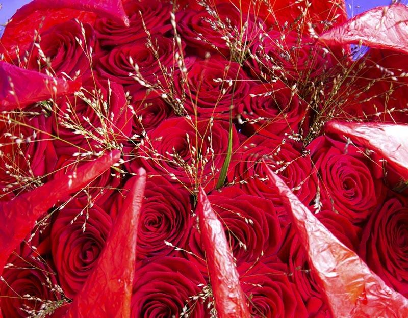 ramo de rosas rojas grandes