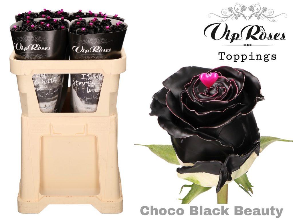 rosas choco black beauty