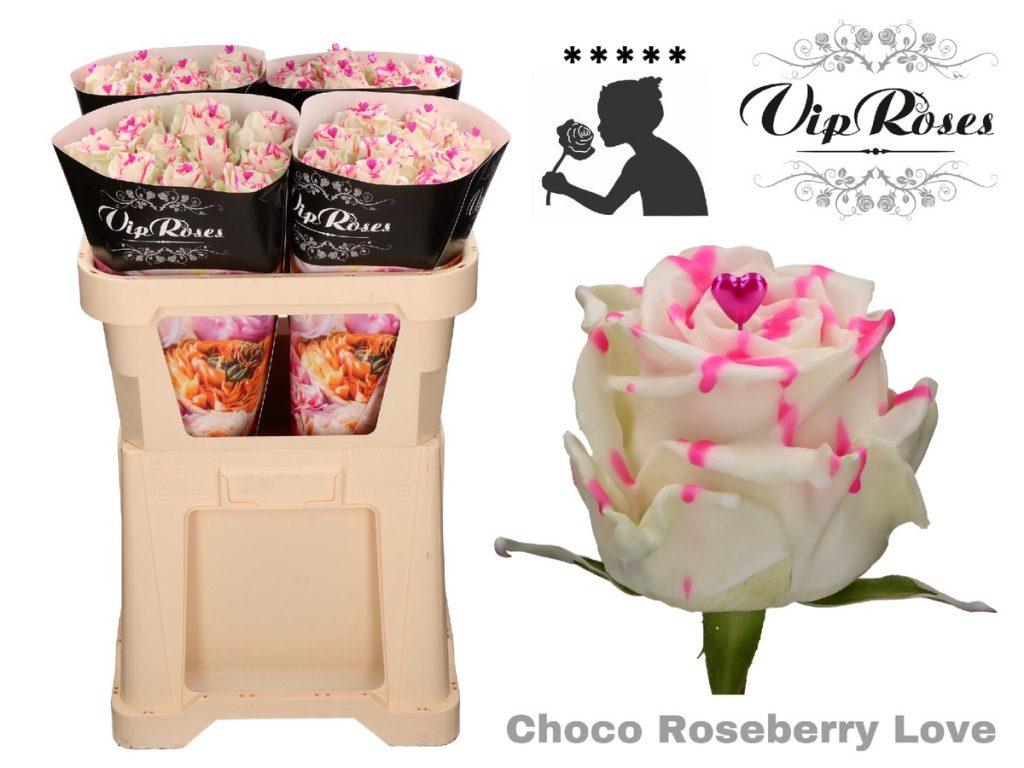 rosas choco roseberry love