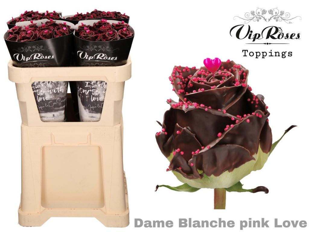 rosa choco dame blanche pink love