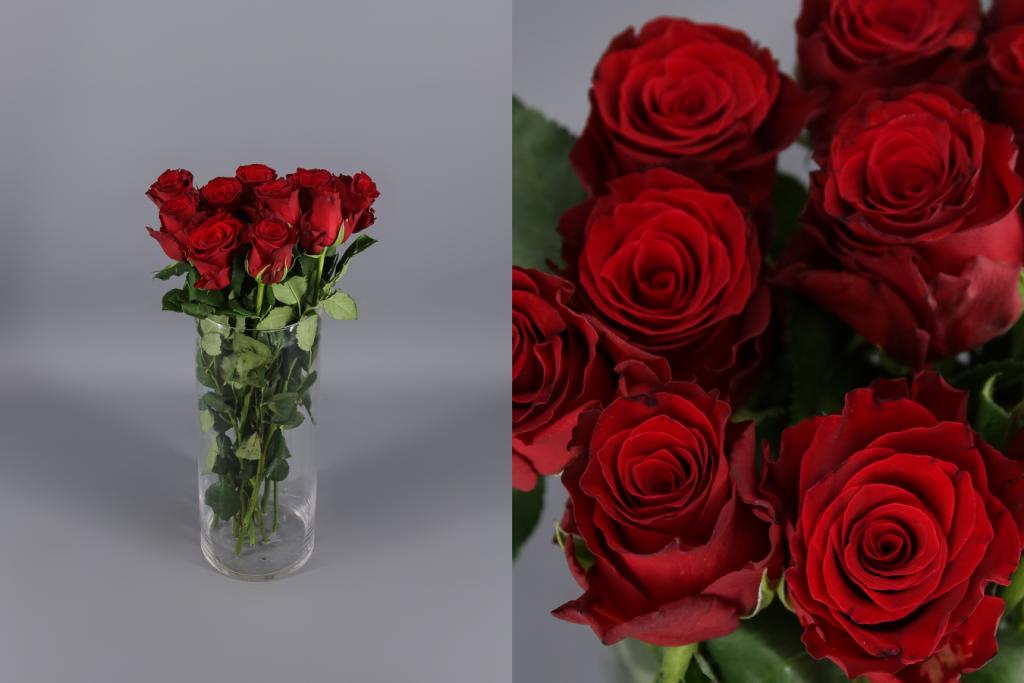 rosa roja San Valentín