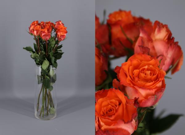rosa naranja Julischka