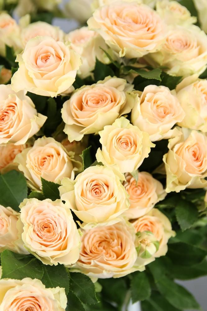 rosas melocotón